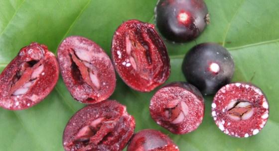 Acai – zázračné ovocie, ktoré k chudnutiu nevedie