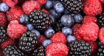 Sú mrazené druhy ovocia a zeleniny zdravé?