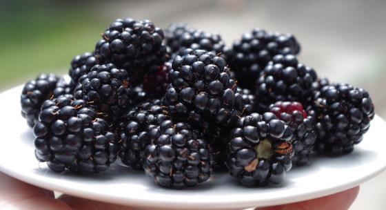 najzdravsie-druhy-ovocia-ktore-by-ste-mali-jest