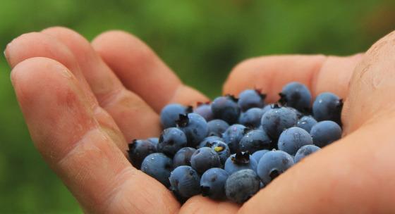5-druhov-ovocia-ktore-by-ste-mali-jedavat-casto