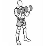 Bicepsový zdvih s jednoručkami