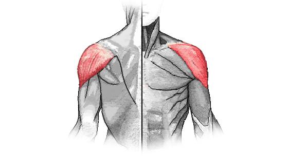 Kinesiológia II. – svaly ramien