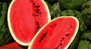 pat-ovoci-bohatych-na-bielkoviny
