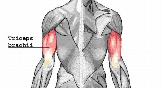 Domáci tréning tricepsov, ktorý nezaberie viac ako 15 minút