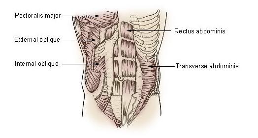 svaly brucha